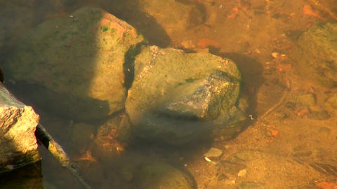 The stone at the bottom of the river Footage