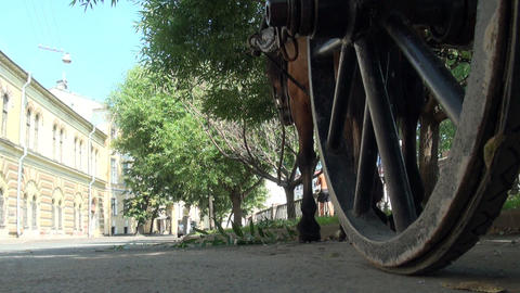 Horse cart on the road Stock Video Footage
