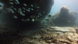 group of fishes swimming, Fuerteventura Canary Islands Footage
