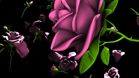 Falling Pink Roses On Black Background CG動画
