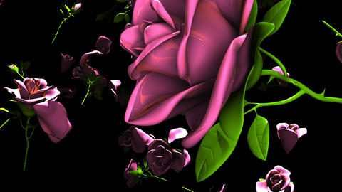 Falling Pink Roses On Black Background CG動画