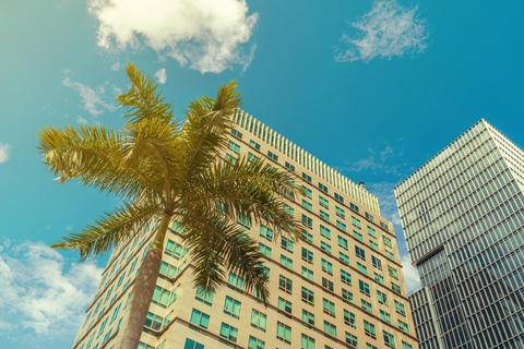 Tropical palm against modern skyscraper フォト