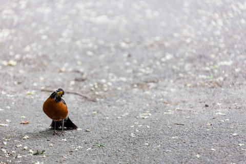 Central Park Cute Sparrows フォト