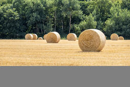 Autumn landscape. Harvest field with straw bale フォト