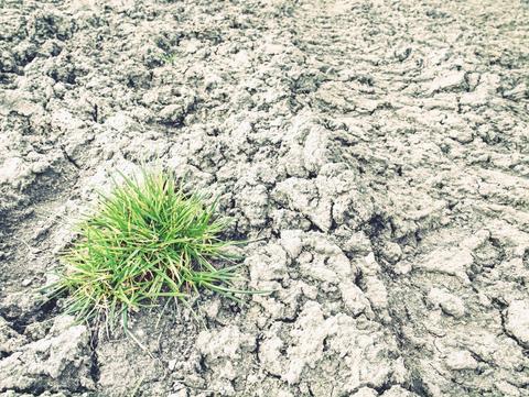Dry grass on the dust and stone desert. Dry burnt dead grass Fotografía