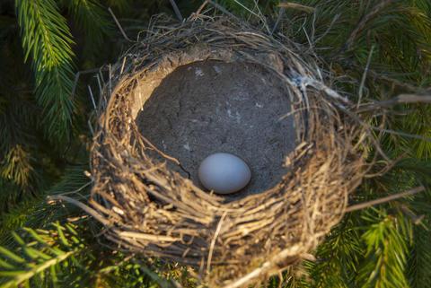 Bird's nest, flooded with sunlight, with egg inside フォト