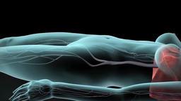 3D animated transparent female nervous system Footage