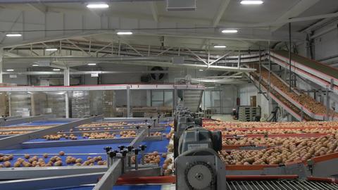 Eggs moving on the conveyor ビデオ