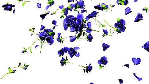 Falling Blue Roses On White Background Animation