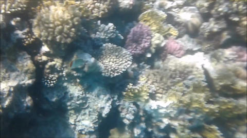 Diving on a coral reef in Egypt Sharm el-Sheikh Live Action