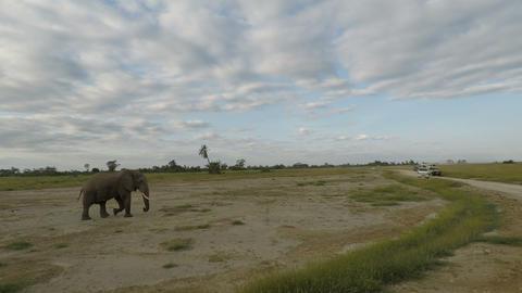 elephants in kenya Live Action