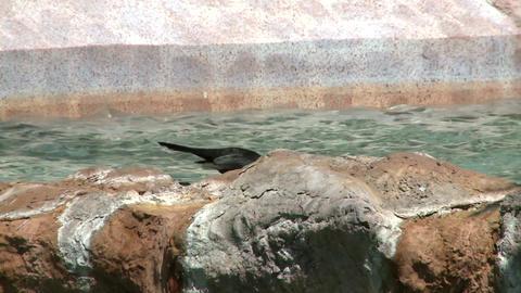 Bird drinking water Footage