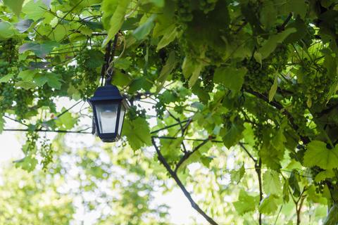 A street lamp hangs in a vineyard on a sunny day Fotografía