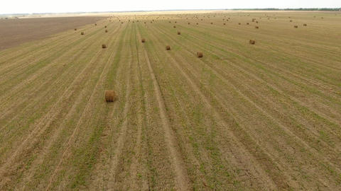 Bales of hay in the field. Harvesting hay for livestock feed. Landscape field Footage