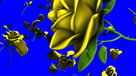 Falling Yellow Roses On Blue Chroma Key Animation