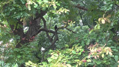 Birds under shelter from monsoon rain GIF