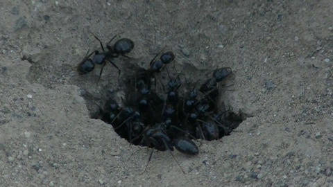 Ant fauna wood insect worker Live Action