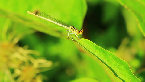 Dragonfly insect mantis wild Footage