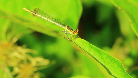 Dragonfly insect mantis wild Stock Video Footage