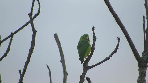 Fauna parrot perico nature Live Action