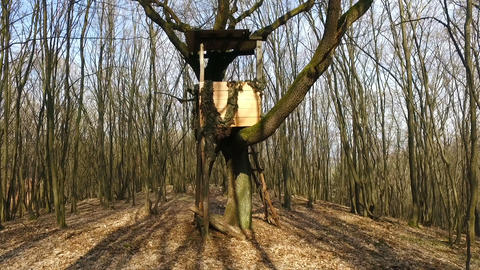 Box Hunting Stand In The Forest Footage
