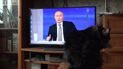The cat looks at the Russian President Vladimir Putin on TV. 4K ビデオ