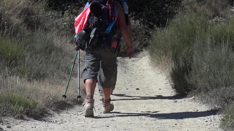 Feet of pilgrims who go on a dusty footpath, among bushes tall vegetation sunbur Footage