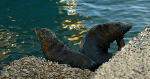 Sea lions at the dock 4k Footage
