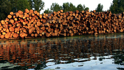 Wood logs by the river Footage