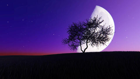 Moonrise on the background of a tree Footage