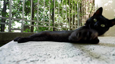 Assisi,Italy-July 28, 2018: A black cat lying on a stone near Basilica di Santa Footage