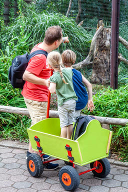 Father explaining daughter and son monkeys in the zoo Photo