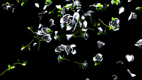 Falling White Roses On Black Background Animación