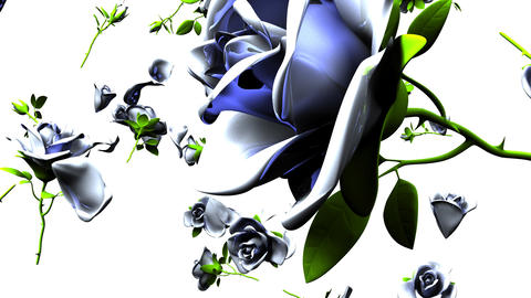 Falling White Roses On White Background CG動画