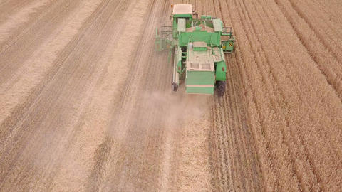 Flight over a Harvester on a Wheat Field. Aerial View GIF