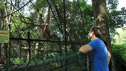 Looking at a Monkey Footage