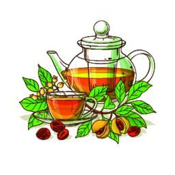 nutmeg tea illustration Vector