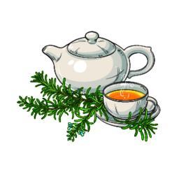 rosemary tea illustration Vector