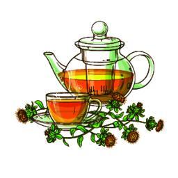 safflower tea vector illustration Vector