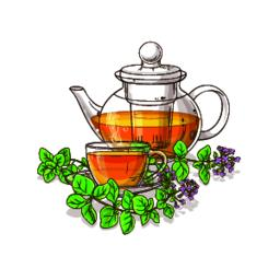 oregano tea illustration Vector