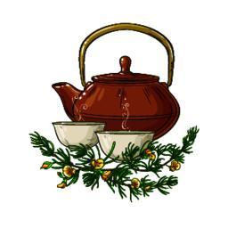 rooibos tea illustration Vector