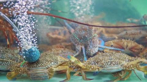 street food in Asia, crabs in aquariums on the night market of food, gourmets GIF