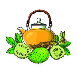 soursop tea illustration Vector