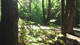 4k C0013 summertime in the forest Footage