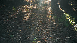 4k C0025 sunlight in the forest Footage