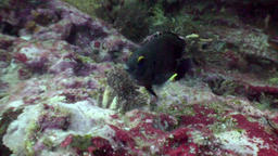 Tropical wildlife of underwater world on background of sea bottom in ocean Footage