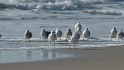 4K Seagulls Closeup 3828 Footage