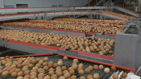 Eggs on the conveyor Live Action