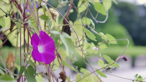 Nature 0100905431 영상물