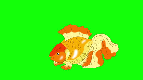 Goldfish Floating in Aquarium Chroma Key Animation